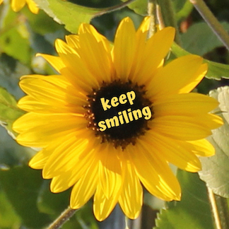 keep smiling Sonnenblume